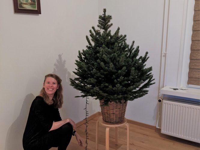 Eindejaar kerstmis kerstboom lampjes afronden